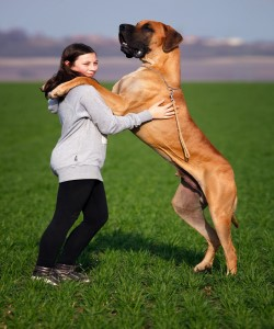 Picture of large dog standing on its hind legs with front paws on owners shoulders
