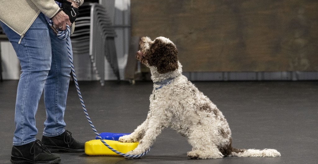 D.O.G. Obedience Group - Confidence and Play